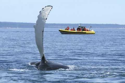 Québec: Whale Watching per Zodiac-Schlauchboot