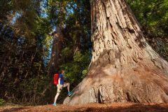 San Jose: Parque Nacional de Yosemite e viagem às sequóias gigantes