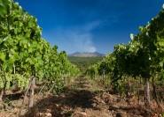 Catania: Ätna Weinprobe und Kochshow mit Mittagessen