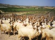 Agrigento: Olivenölverkostung mit Mittagessen