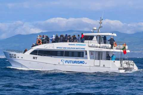 From Ponta Delgada: Whale and Dolphin Watching Trip