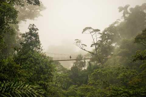 Alajuela: recorrido de medio día por los puentes colgantes del Arenal