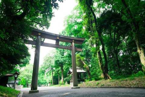 Tokyo: Meiji Shrine Walking Tour with Local Guide