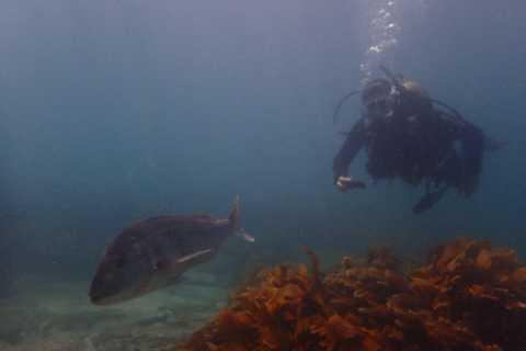 Leigh: visite guidée de plongée à Goat Island pour plongeur certifié