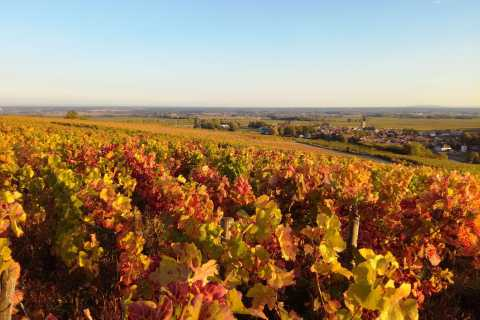 Côte de Beaune Private Local Wineries and Wine Tasting Tour
