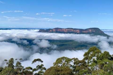Sydney: excursão gastronômica pelas montanhas azuis com almoço