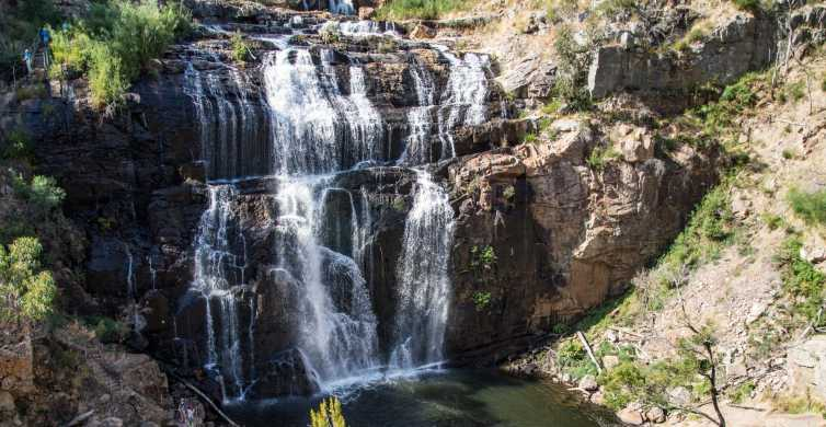From Melbourne: Grampians National Park & Kangaroos