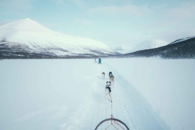 Tromsø: Hundeschlittenfahrt im Camp Tamok