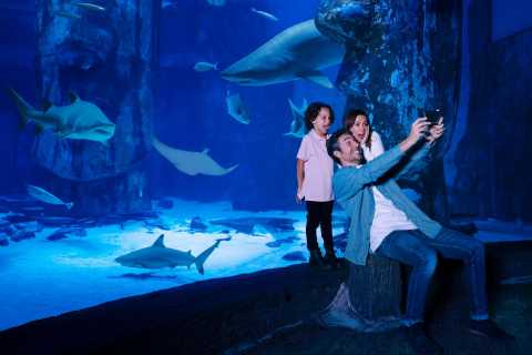 SEA LIFE Arizonan akvaarion yleinen pääsy