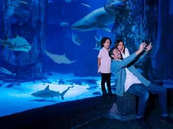SEA LIFE Arizona Aquarium Allgemeiner Eintritt