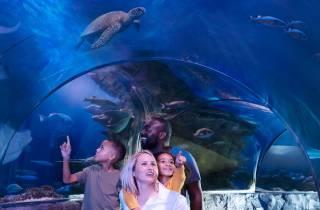 MEERLEBEN Charlotte-Concord Aquarium Allgemeiner Eintritt