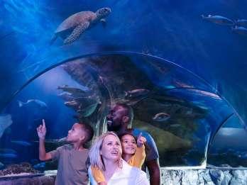 MEERLEBEN Kansas City Aquarium Allgemeine Zulassung