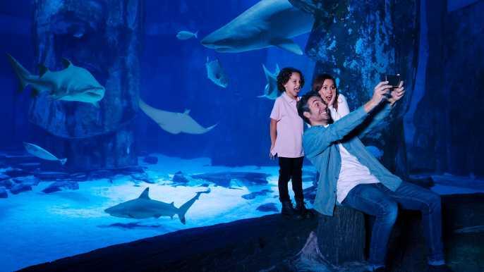 Mall of America: SEA LIFE Minnesota Aquarium Admission