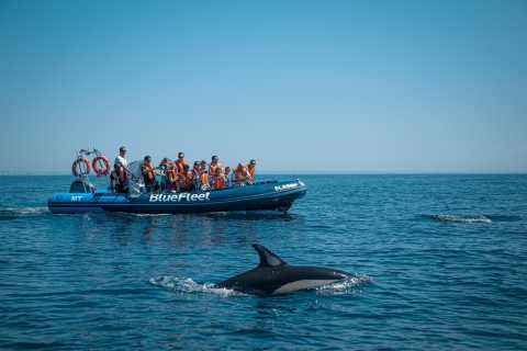 From Lagos: Dolphin Watching Boat Trip
