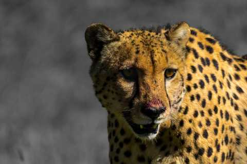 Addo de 4 días al Karoo Safari todo incluido