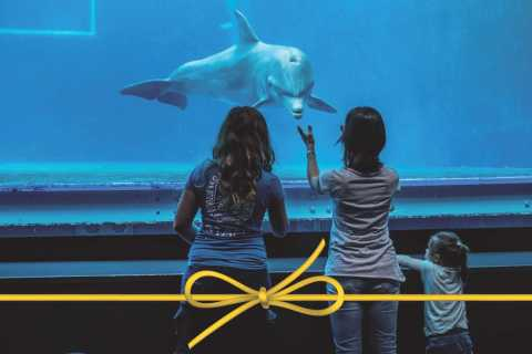 Aquarium of Genoa: Skip-the-Line Ticket