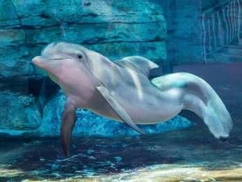 Clearwater Marine Aquarium: Eintrittskarte