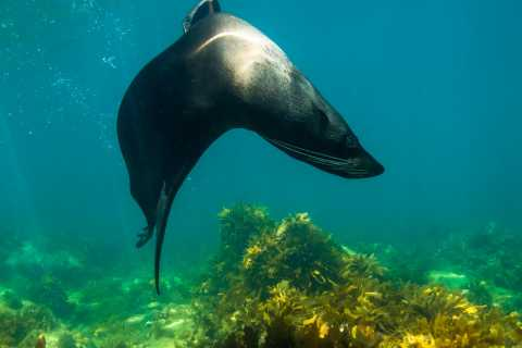 Kangaroo Island: 2-Hour Dolphin, Seal and Snorkeling Tour