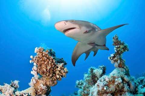 Las Vegas: Shark Reef Aquarium Entry Ticket at Mandalay Bay