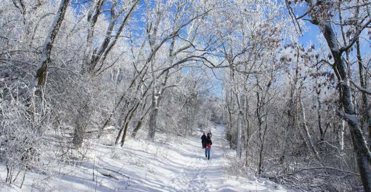 Budapest: Half-Day Hiking Tour in the Buda Hills