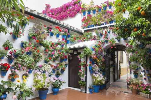 Cordoba: Führung durch das Courtyards Festival