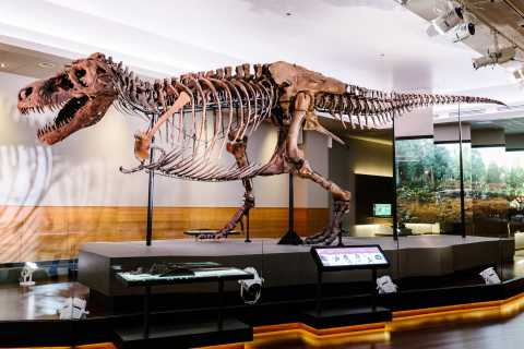 Chicago: Field Museum of Natural History Ticket or VIP Tour