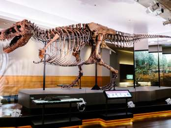 Chicago: Field Museum of Natural History Ticket oder VIP-Tour