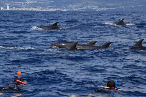 Lajes de Pico: Small-Group Swim with Dolphins