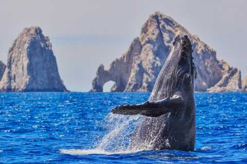 Cabo San Lucas: All-Inclusive Whale Watching Cruise