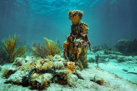 Cancun: snorkeltocht bij MUSA The Underwater Museum