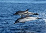 Olbia: Delfinbeobachtungs- und Schnorchelbootstour in der Nähe von ...