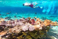 Pearl Island Beach: mergulho com snorkel durante todo o dia com almoço