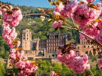 Heidelberg: Sightseeing Bus und Schlosstour