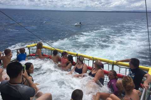 Huskisson: Dolphin Cruise & Boom Netting Experience