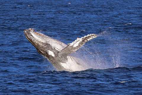 Jervis Bay: 2-Hour Whale Watching Cruise