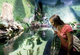What to do in Munich - Munich: Day Ticket to Sea Life