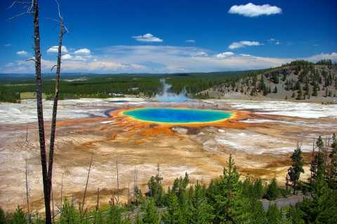 From Jackson: Yellowstone Day Tour Including Entrance Fee