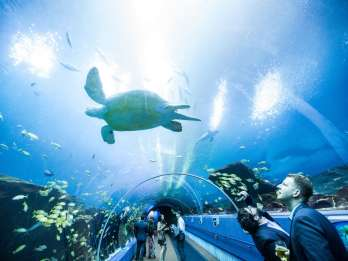 Georgia Aquarium: Virtuelle Tour durch die Ocean Voyager