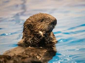 Georgia Aquarium at Home: Virtuelle Tour zu Cold Water Quest