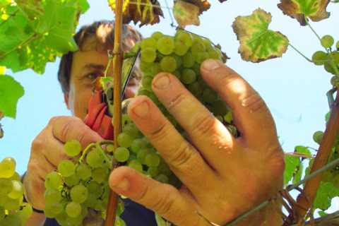 Cantabria: Private Guided Visit to Bodegas Vidular Vineyard