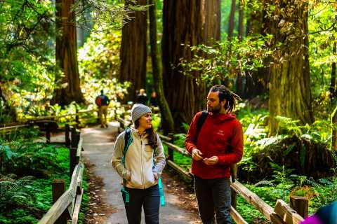 From San Francisco: Muir Woods and Sausalito Half-Day Trip