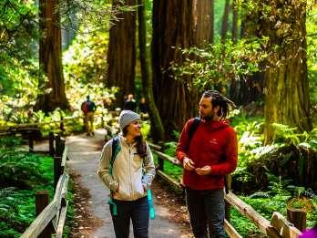 Ab San Francisco: Muir Woods & Sausalito - Halbtagestour