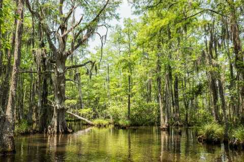 New Orleans: Bayou Swamp Boat Tour