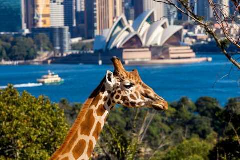 Sydney: Taronga Zoo Tickets