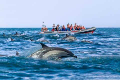Albufeira: Dolphins, Benagil Caves and Coastline Boat Tour