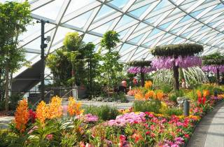 Jewel Changi Flughafen: Hedge Maze und Canopy Park Ticket