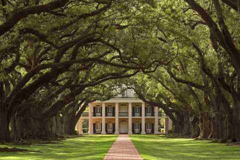 New Orleans: Swamp Boat Ride and Oak Alley Plantation Tour