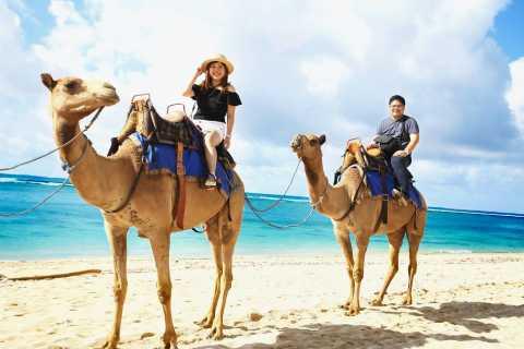 Sharm el-Sheikh: Snorkel- og kamelsafari ved Blue Hole