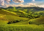Von Florenz: Geführte Tagestour nach Siena