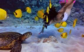 (MAUI/Lahaina Harbor): Afternoon Snorkel